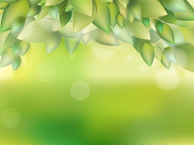 Свежие зеленые листья.