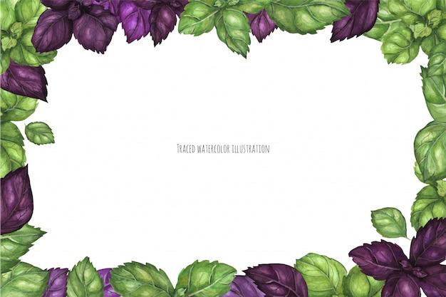 Fresh green and purple basil frame