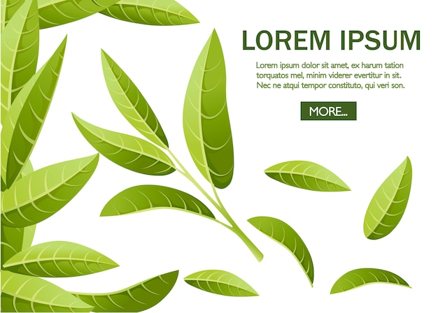 신선한 녹차 잎. , 광고 및 포장을위한 녹차. 흰색 배경에 그림입니다. 텍스트를 놓습니다. 웹 사이트 페이지 및 모바일 앱
