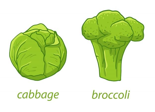 新鮮な緑の野菜はベクトルイラストです。ベジタリアン料理、健康食品、野菜サラダのキャベツとブロッコリー。