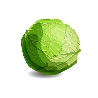 Fresh juicy green cabbage
