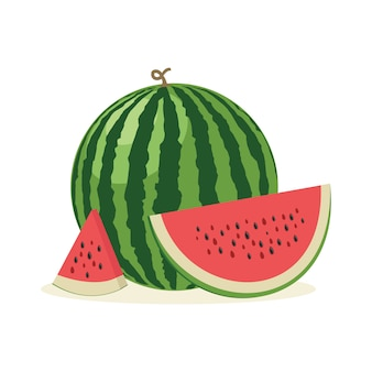 Fresh and juicy whole watermelons and slices. vector illustration.