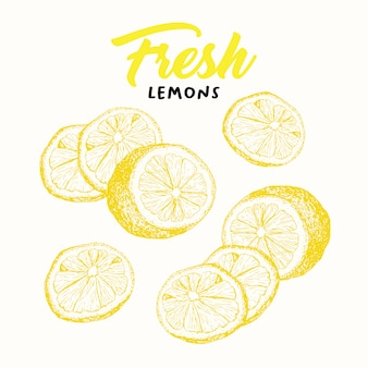 Fresh lemons sketch illustration