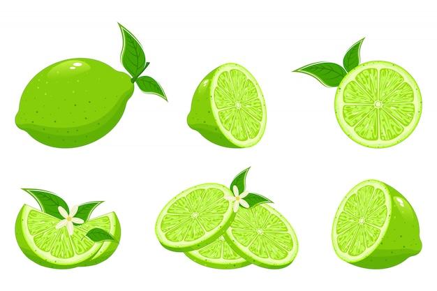 Свежий лайм и сок лайма. ломтики лайма, зеленые цитрусовые с листьями и липовый цветок изолированных иллюстрация набор.