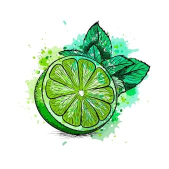 Свежий лайм с листьями и мятой из всплеск акварели, рисованный эскиз. иллюстрация красок