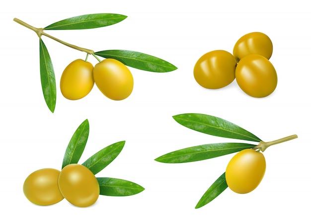 Fresh olives icon set