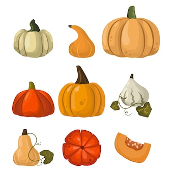 Fresh orange pumpkin vegetable set