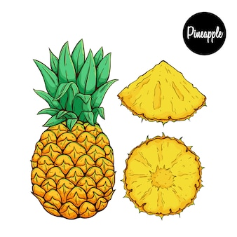Fresh pineapple fruit with colored sketch or hand drawn style