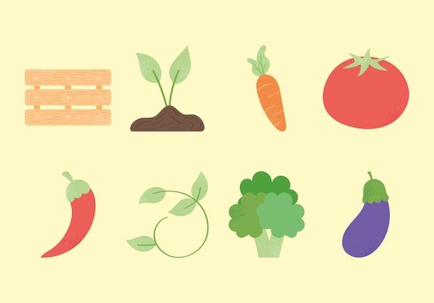 生鮮食品コレクション