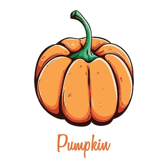 Fresh pumpkin organic eco vegetable food using colored hand drawn style