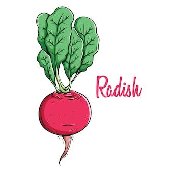 Свежая редька органическая растительная пища в раскраске рисованной стиль