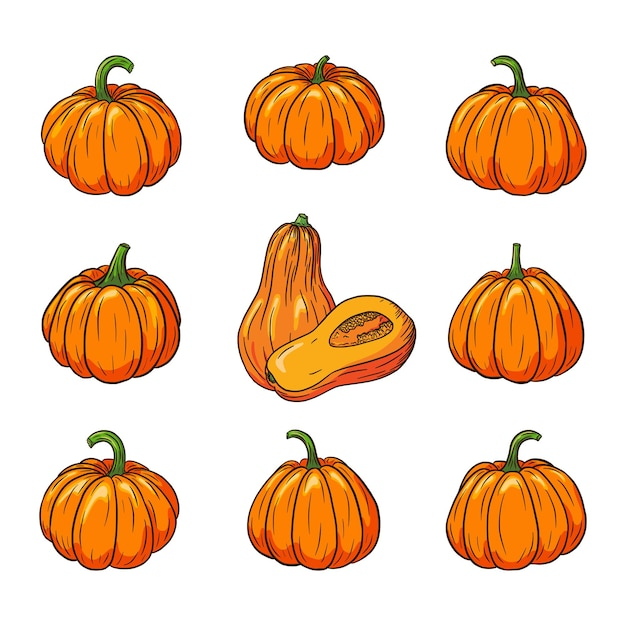 Fresh ripe pumpkins collection. pumpkin illustrations set for stickers, prints, invitation, menu and greeting cards design and decoration. premium vector