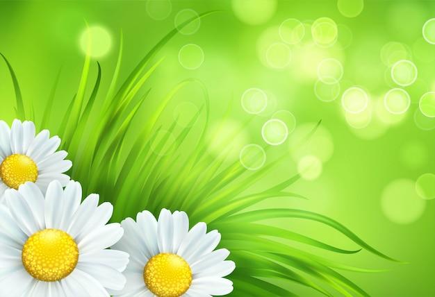 新鮮な春の緑の草とカモミール