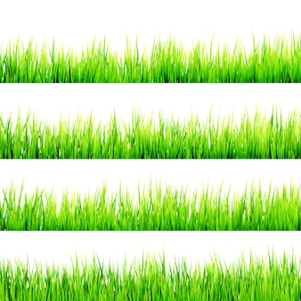 Fresh spring green grass isolated on white.
