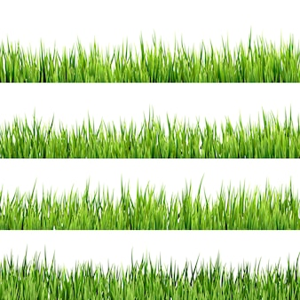 Fresh spring green grass isolated on white