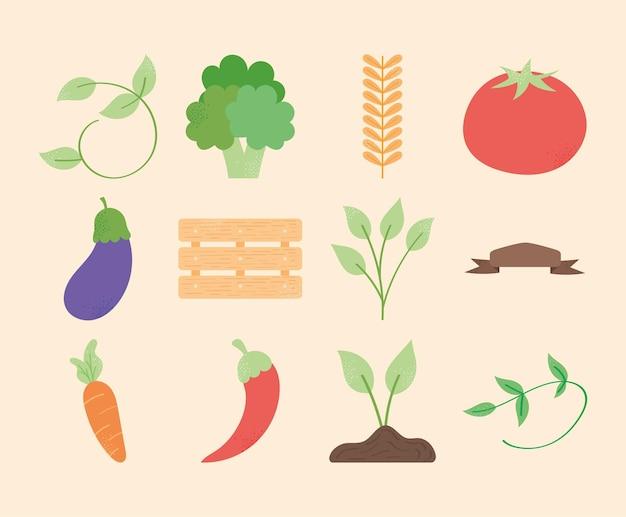 新鮮な野菜や植物