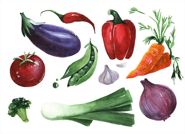 Набор рисованной свежие овощи акварель иллюстрации. сбор зелени на белом фоне. ингредиенты салата, овощи, натуральные продукты, предметы здорового питания, набор акварельных картин