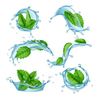Fresh water mint. liquid splashes with green menthol leaf for drink vector realistic collection