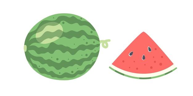 신선한 수박 전체 및 조각입니다. 여름 열대 과일 기호입니다. 흰색 배경에 고립 된 평면 만화 스타일의 벡터 일러스트 레이 션