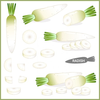 Fresh white radish or daikon with green top in various cuts and styles