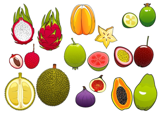 Freshly plucked bright  star fruit and pink litchi, soft and ripe passion fruit and feijoa, fig and papaya, juicy guava, dragon fruit and sweet durian fruits