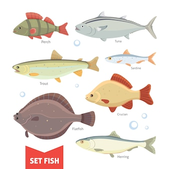 민물 고기 컬렉션 흰색 배경에 고립입니다. 물고기 벡터 일러스트 레이 션을 설정합니다.