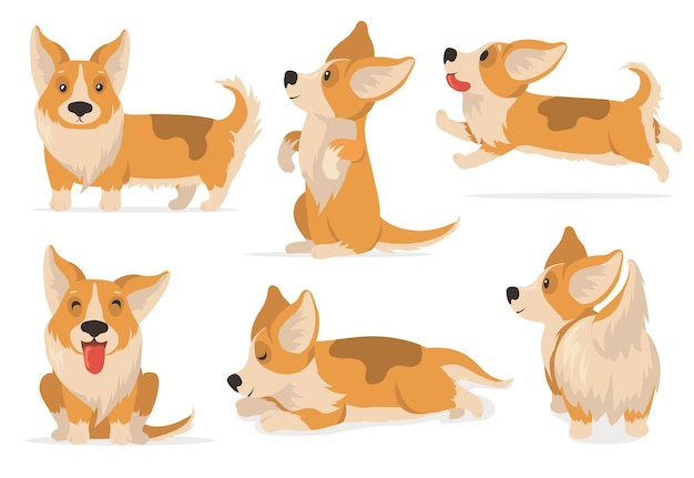 Friendly corgi set