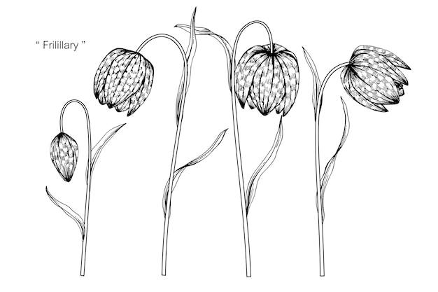 Fritillary花の描画のイラスト