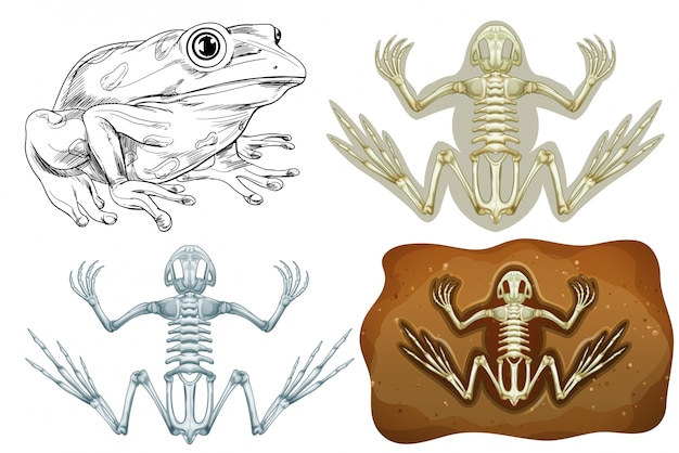 Frog and fossil underground