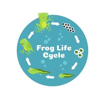 カエルのライフサイクル。卵からオタマジャクシや成体のカエルまで。子供の生物学教育イラスト。