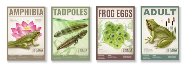 Frog life cycle from fertilized eggs jelly  tadpoles to adult amphibia 4 realistic posters set