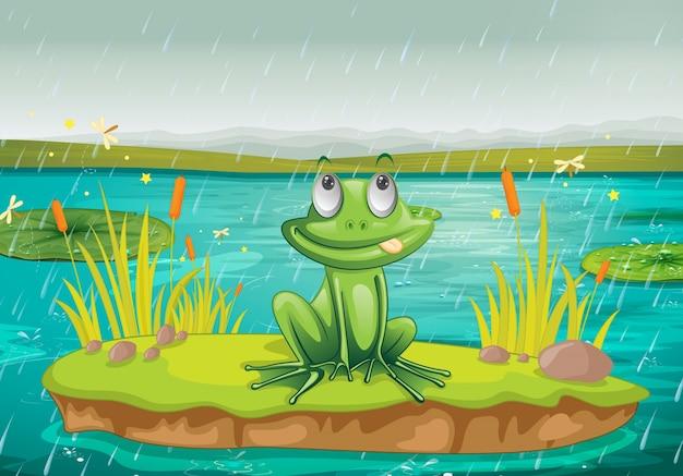 Лягушка на воде