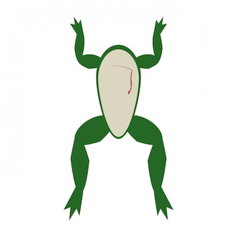 Frog open for experiment