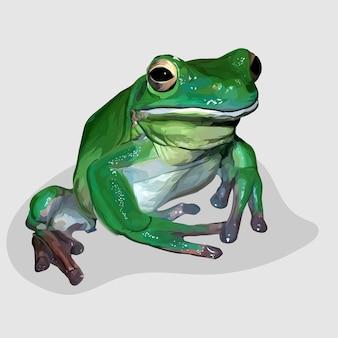 Лягушка реалистичные рисованной иллюстрации и векторы
