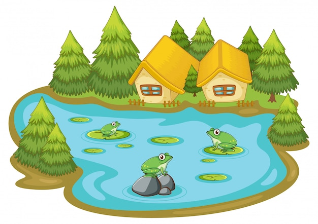 Лягушки в пруду на белом фоне