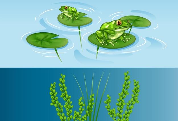 Лягушки на водяной лилии и подводной сцене