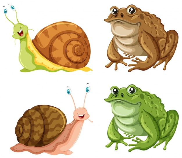 Frogs and snails on white background illustration