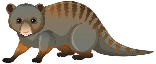 Parte anteriore dell'opossum in posizione eretta su sfondo bianco