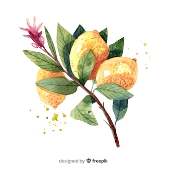 Fruit background with watercolor lemon