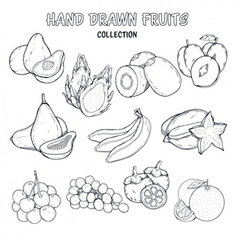 Fruit coloring design