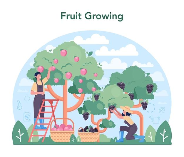 과일 농업 및 가공 산업. 농업과 재배의 아이디어입니다. 유기농 수확 선택. 말린 과일, 주스 및 통조림 과일 생산. 격리 된 평면 벡터 일러스트 레이 션