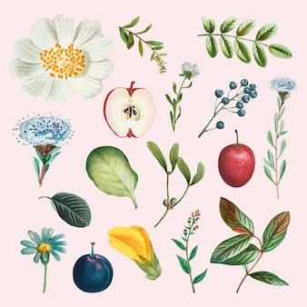 Illustrazione disegnata a mano dell'insieme dell'annata di vettore della frutta e del fiore