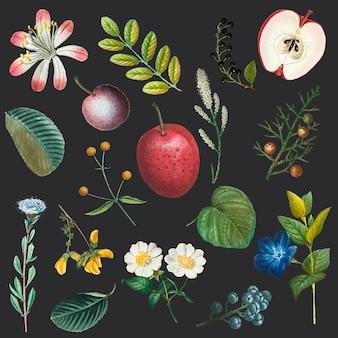 Illustrazione disegnata a mano dell'insieme dell'annata del fiore e della frutta