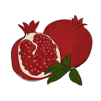 손으로 그린 스케치, 그림에서 과일 가닛 석류