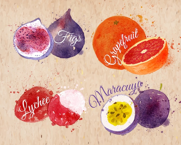 Fruit watercolor figs, grapefruit, lychee kraft