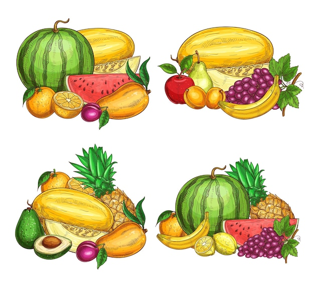 Fruits farm harvest sketch of ripe watermelon, melon and papaya, orange, plum and apple