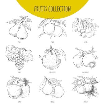 果物セットベクトルフリーハンド鉛筆描きスケッチイラスト