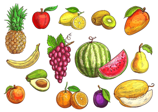 Fruits  sketch hand drawn banana, apple, avocado, peach, red grape, lemon, orange, watermelon, kiwi, plum, mango pear melon
