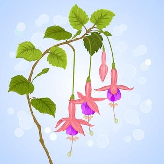フクシアの花。