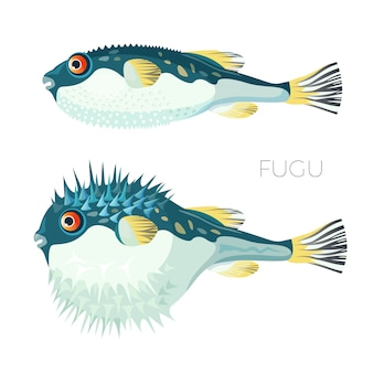 Fugu fish japanese puffer